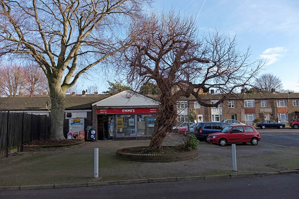 A mulberry tree on Colson Way, Streatham Park, SW16
