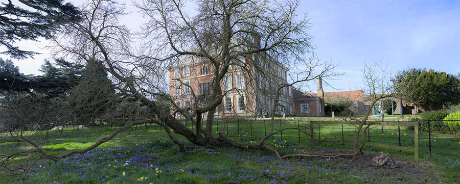 The Forty Hall mulberru